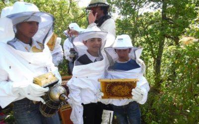 Visite pédagogique au rucher de Castels