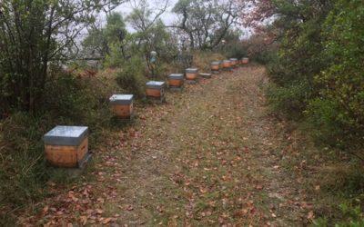 Visite de Janvier au rucher de Goth