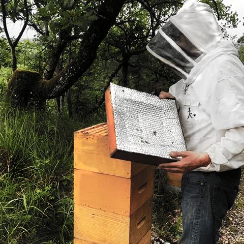 Récolte en ruche warré