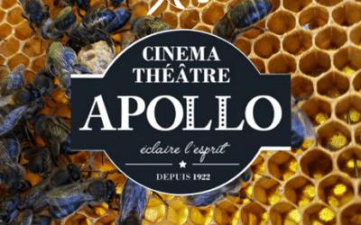 Projection et débats sur l'abeille